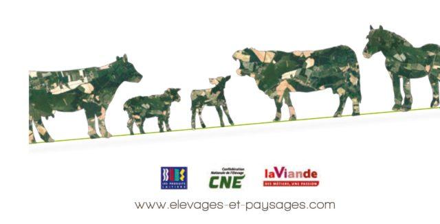 DPBaladesElevagePaysagesImage-INTERBEV